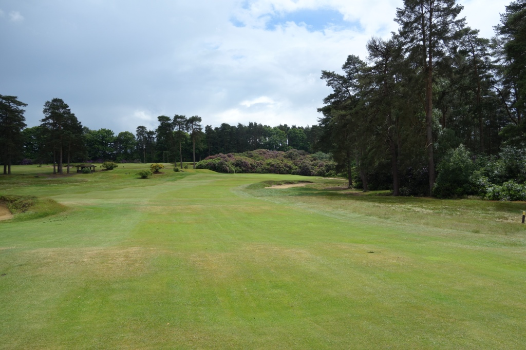 Approach shot to the 12th hole. Almost enclosed green surrounded by the beautiful rhododendrons.